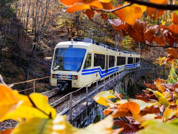 The foliage-train